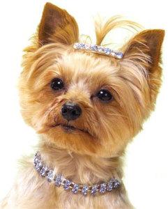 Заколка и ошейник для собаки со стразами Сваровски - dailyrevelry.com